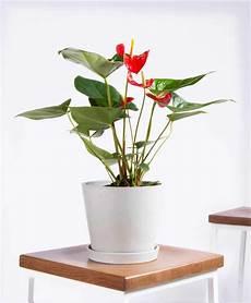 best indoor flower plants for beginners popsugar home