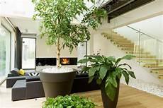 indoor gardening how to plant get benefits from indoor greenery