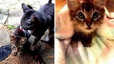 Katze Sammelt Ein Verwahrlostes K 228 Tzchen Auf Der Stra 223 E