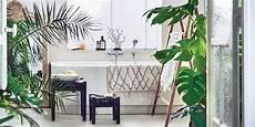 plante verte pour salle de bain quelles plantes pour une salle de bains