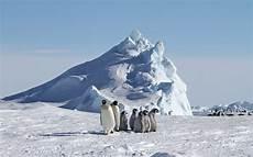 file emperor penguins at snow hill island jpg wikimedia