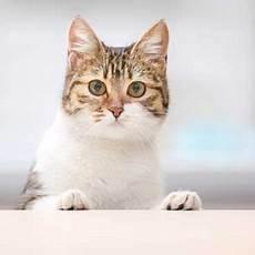 Katze Allein Zu Hause Tipps Tricks Tierisch Wohnen