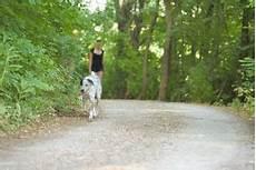baladez votre toutou avec des promeneurs de chiens