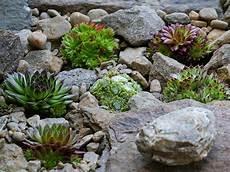 Eigener Steingarten Ein Absoluter Hingucker Im Garten