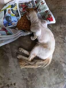Kucing Jalanan Perlukan Bantuan Gambar Straycat Needs