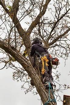 Ein Baumpfleger Mit Einer Kettens 228 Ge Schneidet Ein