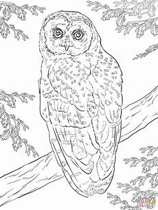 Malvorlagen Eulen Gratis Northern Spotted Owl Coloring Page Free Printable
