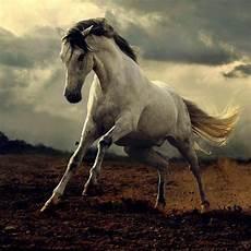 Schöne Pferde Bilder - sch 246 ne pferde bilder die die gro 223 artigkeit der pferde