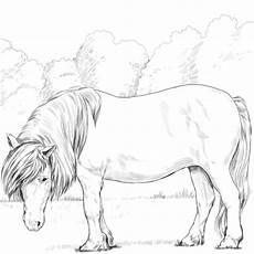Ausmalbilder Pferde Ponys Shetland Pony Coloring Page Free Printable Coloring Pages