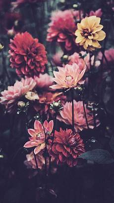 iphone x flower wallpaper hd 21 pretty wallpapers for your new iphone xs max phone