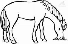 Malvorlagen Pferde Gratis Ausdrucken Pferde Ausmalbilder Zum Drucken Ausmalbilder Pferde