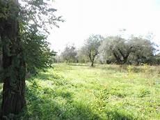 vendita viterbo vendita terreni agricoli viterbo cerco terreno agricolo