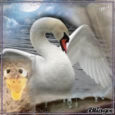 vom hässlichen entlein zum schönen schwan vom h 228 sslichen entlein zum sch 246 nen schwan picture