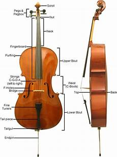 Parts Of A Cello Cello Lessons