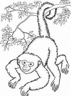 Ausmalbilder Zum Drucken Affe Malvorlagen Fur Kinder Ausmalbilder Affe Kostenlos