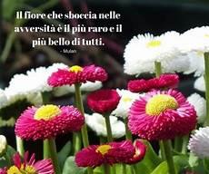 frasi con fiori 12 best frasi sui fiori images on