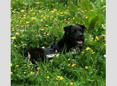 wat voor een kruising hebben jullie?   pagina 2   HondenForum