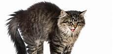 Warum Haben Katzen Angst Vor Gurken Tiermedizin Dr Gumpert