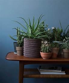 Pflanzen Für Dunkle Ecken In Der Wohnung - gr 252 npflanzen im zimmer so werden sie in szene gesetzt