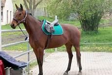 Malvorlage Pferd Mit Sattel Sattel Im Preisvergleich G 252 Nstig Kaufen Bei Pferd De