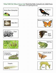 nature and animals worksheets 15101 match the baby animal to its grown up form