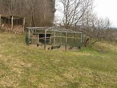 animali da cortile animali da cortile con la presenza di due pavoni picture