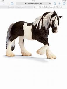 welche pferderasse passt zu mir welches pferd passt zu mir seite 15
