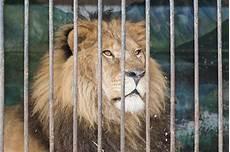 animali in gabbia dietro la gabbia delle barre allo zoo immagine stock