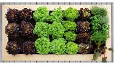 hochbeet richtig bepflanzen hochbeet bepflanzen tipps f 252 r die bepflanzung ihres