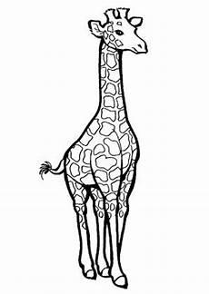 8 beste ausmalbilder giraffe tiere malvorlagen