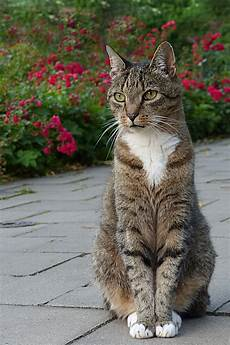 Gambar Kucing Duduk Koleksi Gambar Hd