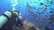 galapagos diving 2013 youtube