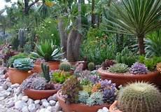 Plantes Grasses Ext 233 Rieur Conseils D Entretien Et Id 233 Es