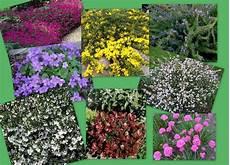 plantes vivaces pour talus pepiniere