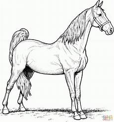 ausmalbilder pferde malvorlagen kostenlos zum ausdrucken