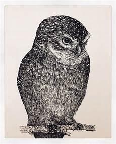 Terbaru 28 Gambar Burung Hantu Menggunakan Pensil Richa