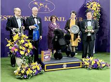 westminster best in show 2020
