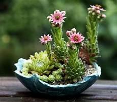 fiori perenni da vaso speciale moda donna primavera estate begonie in vaso