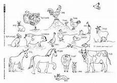 Zootiere Malvorlagen Quotes Wald Tiere Pflanzen Waldtiere Ausmalbilder Tiere Tiere