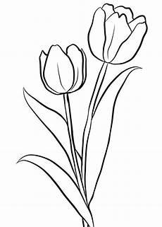 Ausmalbilder Blumen Tulpen Ausmalbilder Ausmalbilder Tulpen Zum Ausdrucken
