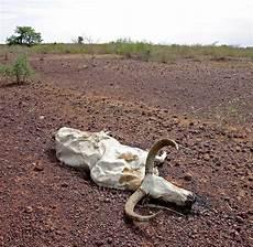 zerstörte natur vorher nachher sahelzone begr 252 nung dr 228 ngt w 252 ste zur 252 ck welt