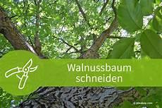 säulenkirsche richtig schneiden wann apfelbaum pflanzen apfelbaum pflanzen in 6 schritten