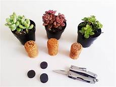 Bouchon De Li 232 Ge Comme Mini Pot Pour Une Plante Succulente
