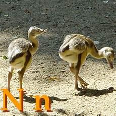 animal en g 30218 wikijunior alphabet des animaux n wikilivres