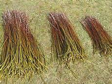 weidenstecklinge weidenruten zaun flechten stecklinge