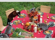 Lemurs Love Their Thanksgiving Dinner   Neatorama