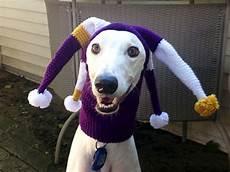 hund mit mütze dogs in silly hats