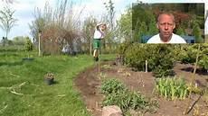 Steckholz Vermehrung Pflanzen