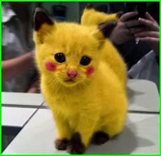 5000 Gambar Kucing Lucu Imut Dan Paling Menggemaskan