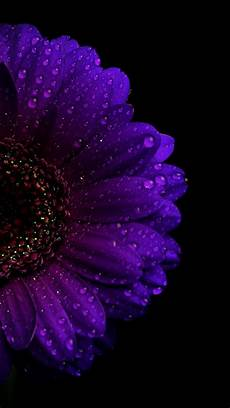iphone purple flower wallpaper pin by avrey schumacher on wallpapers in 2019 purple